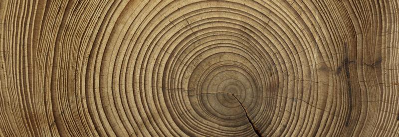sezione-tronco-in-legno